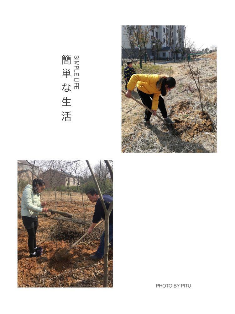5植树1.jpg
